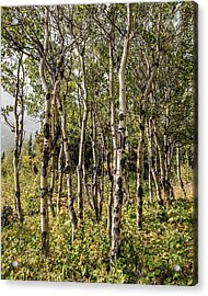 Acrylic Print featuring the photograph Aspen Delight At Glacier by Lon Dittrick