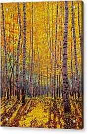 Aspen Glow Acrylic Print