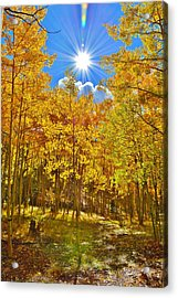 Acrylic Print featuring the photograph Aspen Grove Aglow by Diane Alexander