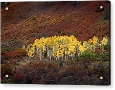 Aspen Grove Acrylic Print by Rich Franco