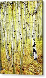 Acrylic Print featuring the photograph Aspen Grove by Scott Kemper