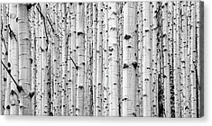 Acrylic Print featuring the photograph Aspen Grove by Stephen Holst