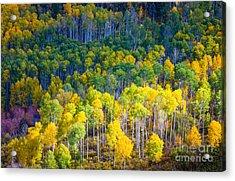 Aspen Hillside Acrylic Print by Inge Johnsson