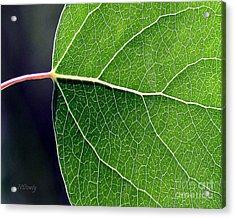 Aspen Leaf Veins Acrylic Print