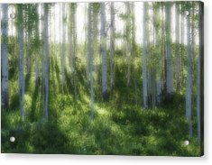 Aspen Morning 2 Acrylic Print