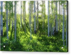 Aspen Morning 3 Acrylic Print