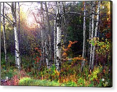 Acrylic Print featuring the photograph Aspen Morning by Wayne King