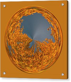 Aspen Orb Acrylic Print by Bill Barber