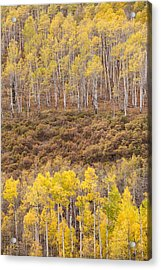 Acrylic Print featuring the photograph Aspen Patterns by Patricia Davidson
