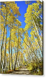 Acrylic Print featuring the photograph Aspen Road by Ray Mathis