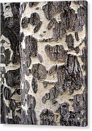 Aspen Scars Acrylic Print