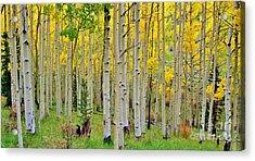 Aspen Slope Acrylic Print by Ellen Heaverlo