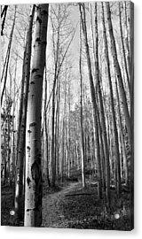 Aspen Trail Acrylic Print by Tobin Truslow