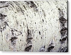 Acrylic Print featuring the photograph Aspen Tree Bark by Christina Rollo