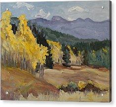 Aspen Tree Splash Of Fall Steamboat Springs Colorado Acrylic Print by Zanobia Shalks