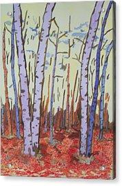 Aspen Trees Acrylic Print by Connie Valasco