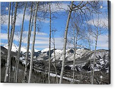 Aspen Trees In Snowmass Acrylic Print by Elizabeth Fontaine-Barr