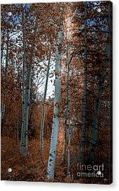 Aspen Trees Ryan Park Wyoming Acrylic Print