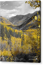 Aspen Valley In Fall Acrylic Print by Jeff White