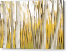 Acrylic Print featuring the photograph Aspens 2 by Alex Lapidus