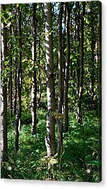Acrylic Print featuring the photograph Aspens And Shadows by Marilynne Bull