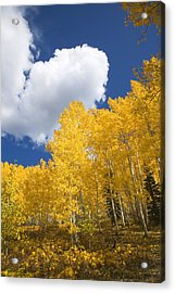 Aspens And Sky Acrylic Print by Ron Dahlquist - Printscapes