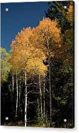 Acrylic Print featuring the photograph Aspens And Sky by Steve Stuller