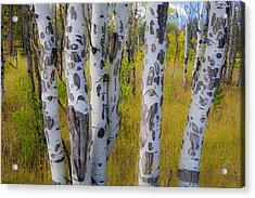 Acrylic Print featuring the photograph Aspens by Gary Lengyel