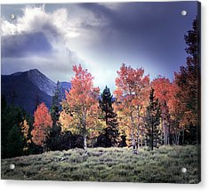 Aspens In Autumn Light Acrylic Print by Leland D Howard