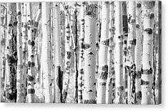 Acrylic Print featuring the photograph Aspens In Black And White  by Saija Lehtonen