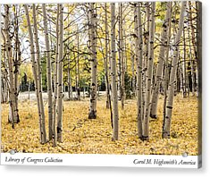 Aspens In Conejos County In Colorado, Near The New Mexico Border Acrylic Print by Carol M Highsmith