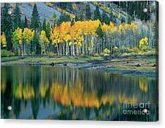 Aspens In Fall Color Along Lundy Lake Eastern Sierras California Acrylic Print by Dave Welling