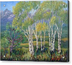 Aspens In The Rockies Acrylic Print by Maxine Ouellet