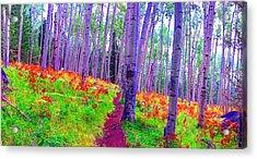 Aspens In Wonderland Acrylic Print