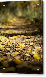 Aspen Leaves On Trail Acrylic Print