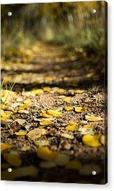Aspen Leaves On Trail Acrylic Print