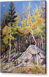 Aspens Near Bear Lake Acrylic Print by Carole Haslock