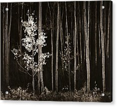 Aspens Northern New Mexico Acrylic Print