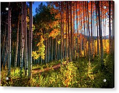 Acrylic Print featuring the photograph Aspens Of The West Elk Mountains by John De Bord