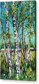 Aspens On The Farm Acrylic Print