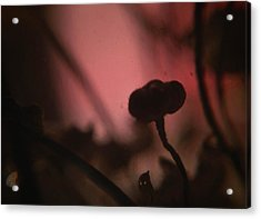 Aspiration With Ghost Acrylic Print