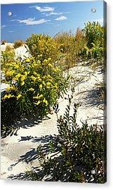 Assateague Beach 5 Acrylic Print by Alan Hausenflock