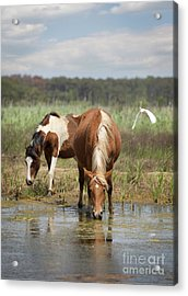 Assateague Pony Pair Acrylic Print