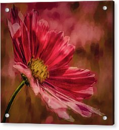 Acrylic Print featuring the digital art Aster Red Painterly #h1 by Leif Sohlman