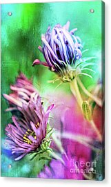 Asters Gone Wild 2 Acrylic Print