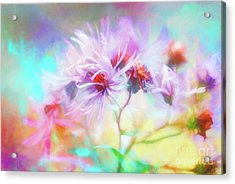 Asters Gone Wild Acrylic Print