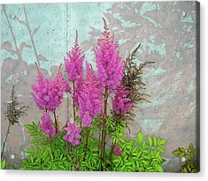 Acrylic Print featuring the photograph Astilbe And Shadows by Randy Rosenberger