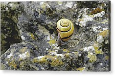 At A Snail's Pace Acrylic Print by Rona Black