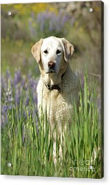 At Attention Acrylic Print by Jim and Emily Bush