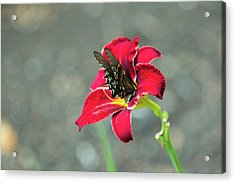 At One With The Orchid 2 Acrylic Print